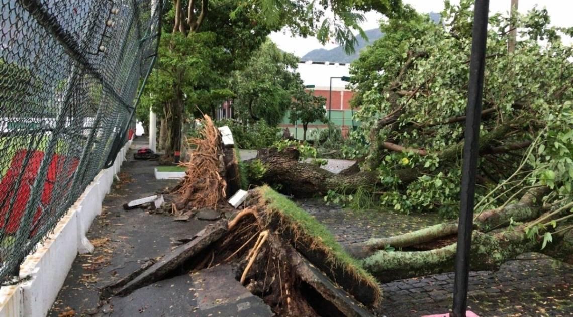 Temporal no Rio causa danos na Gávea