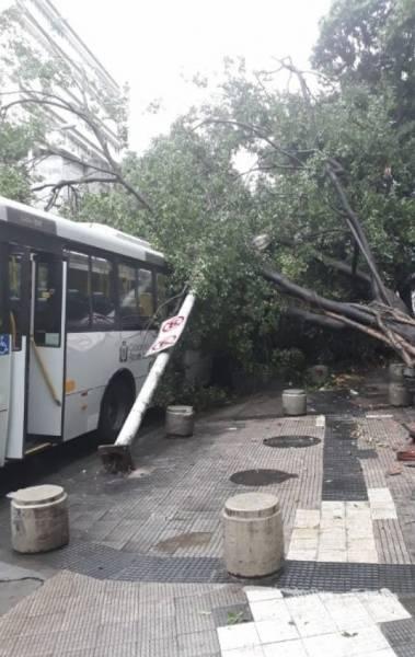 Queda de árvore na Rua Voluntários da Pátria, em Botafogo