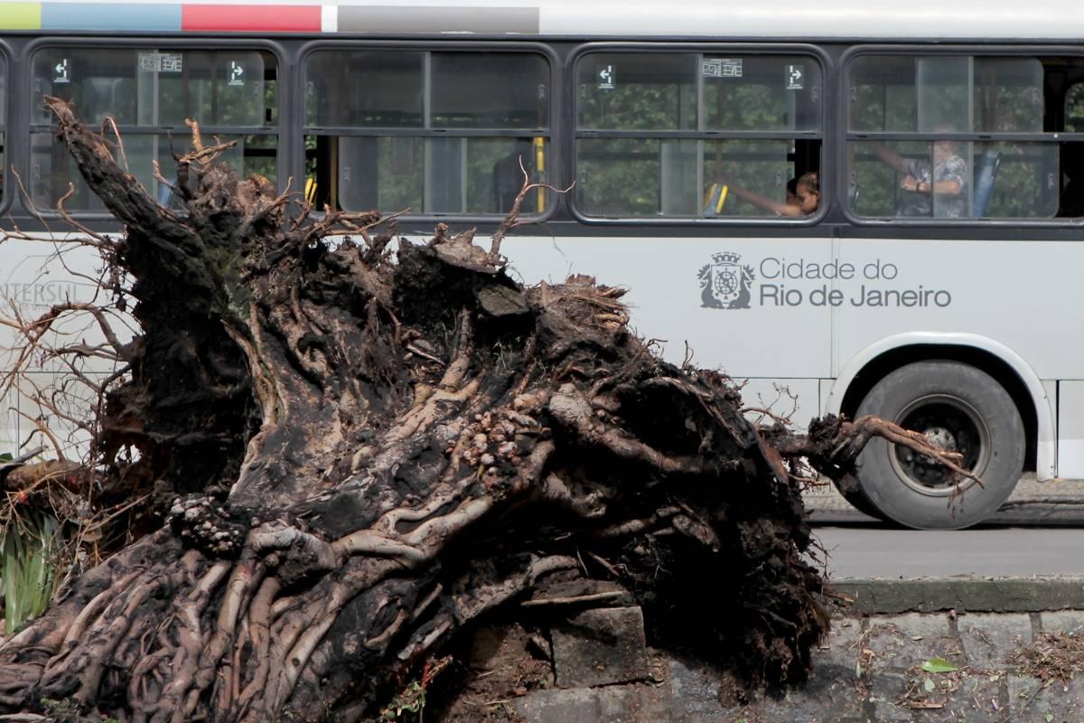 Temporal deixa rastro de destruição e causa mortes no Rio