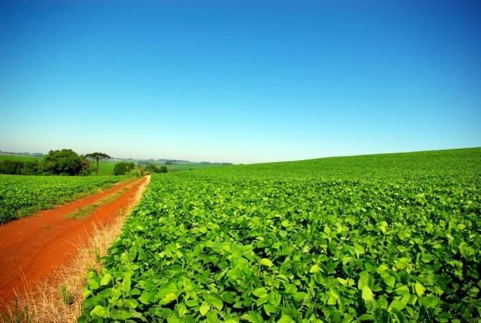 Campo de soja no Rio Grande do Sul: a cultura voltada para a exportação e alimentação animal utiliza 52% do volume de agrotóxicos da lavoura brasileira