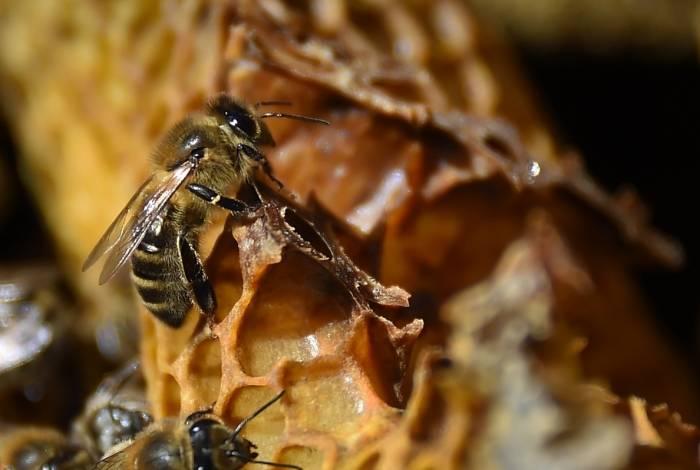 Pesquisadores apontam o uso de pesticidas sintéticos na agricultura como uma das causas para a iminente extinção de diversas espécies de insetos no mundo