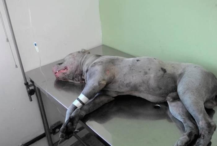 O cão está internado em Belford Roxo e passará por cirurgia