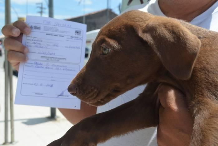 Consultas gratuitas para cães e gatos em Rio das Ostras