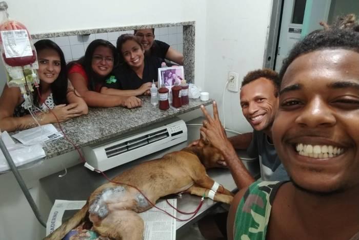 Cãozinho baleado foi socorrido na Fazenda Modelo