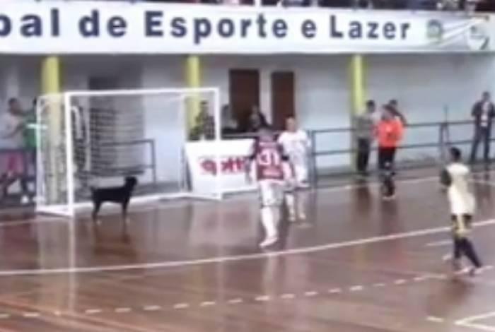 Cachorro invade quadra durante jogo de futsal no Paraná