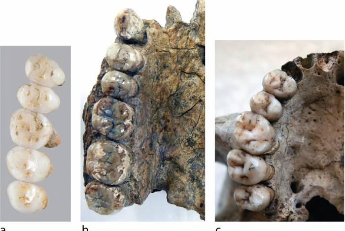 Dentes fósseis das espécies recém-descobertas Homo Luzonesis e a de Errectus Sapiensa desenterrada durante a escavação na Gruta de Callao