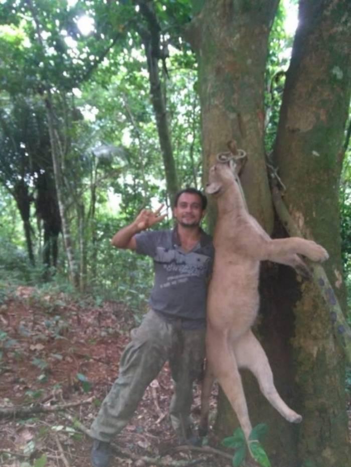 Homem identificado como Pará posa ao lado de onça-parda morta e enforcada, no Parque Nacional da Serra dos Órgãos, em Santo Aleixo, distrito de Magé, na Baixada Fluminense.