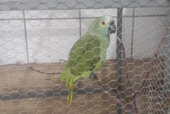 Papagaio é detido no Piauí por avisar a traficantes sobre a chegada da Polícia Militar
