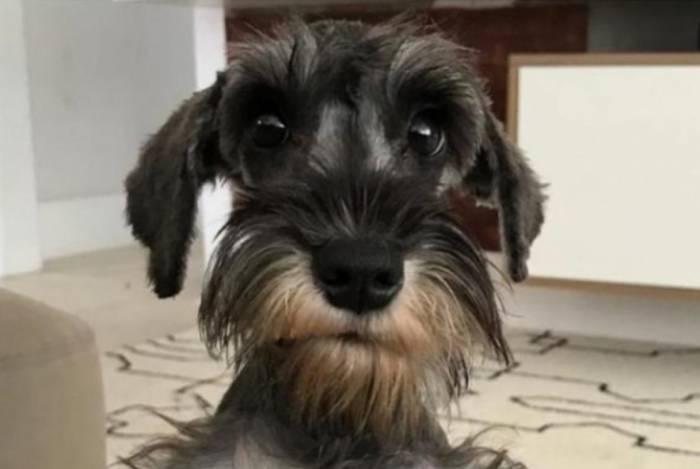 Afonso, cachorro de Anitta, morre no Rio