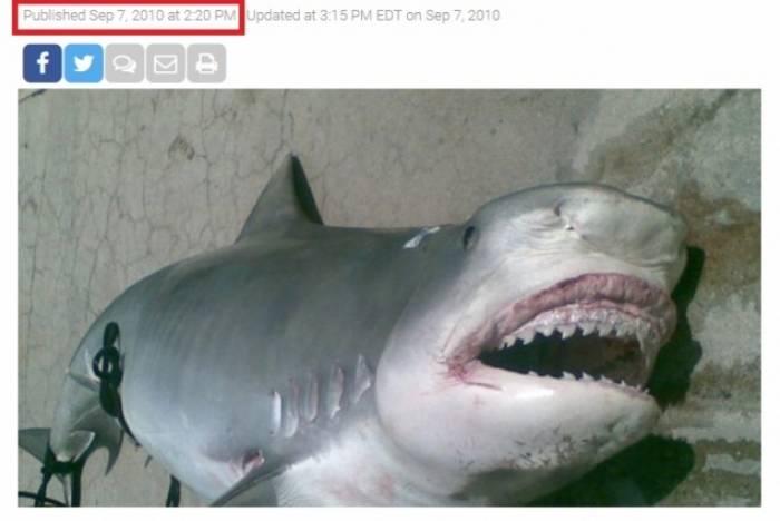 É mentira informação sobre tubarão com restos de humanos numa praia do Rio de Janeiro