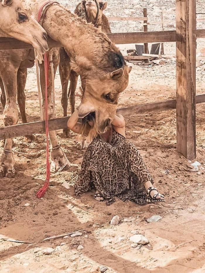 Giovanna Ewbank é 'atacada' por camelo em Omã, na Península Arábica