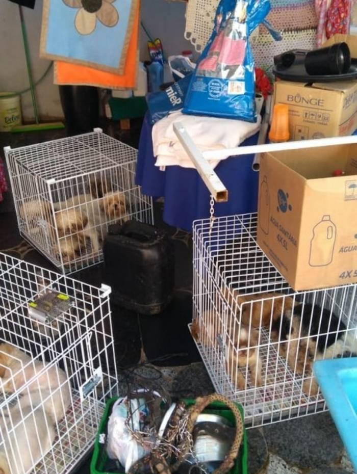 Entre os animais estavam cachorros, que foram encontrados em condições de maus tratos