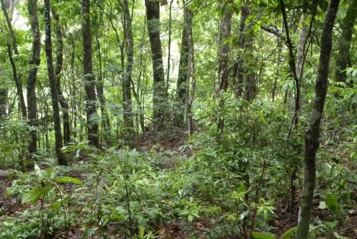 RPPN de Bugios da Boa Esperança tem um total de 5,65 hectares e está situada na cidade de Miracema