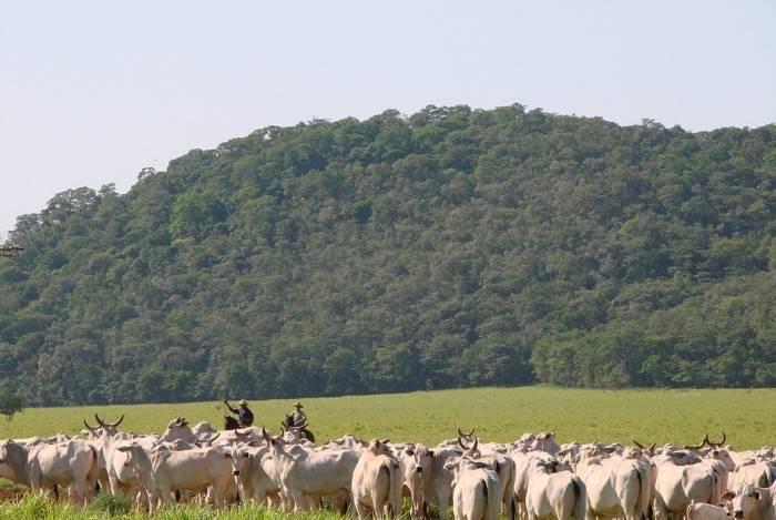 Franceses temem enxurrada de carne bovina do Mercosul. Naquele país, o setor é dependente de subsídios