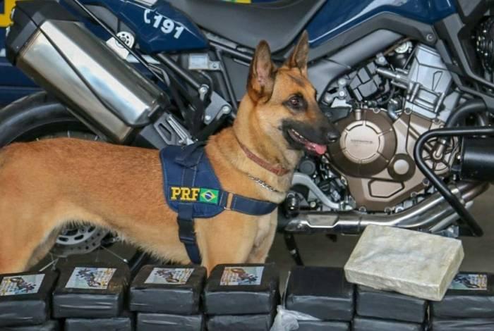 Cão que ajudou a achar a droga no veículo