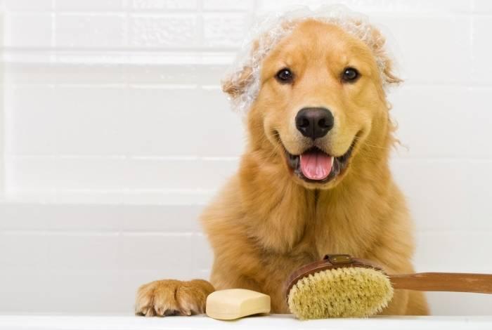 O banho a seco pode ser dado de várias maneiras: talco, spray líquido, gel e lenços umedecidos
