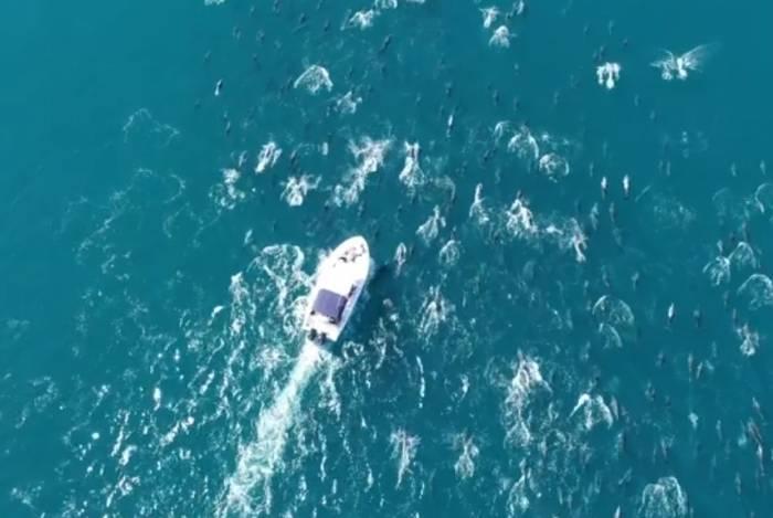 Cerca de 500 golfinhos escoltam pesquisadores do Laboratório de Mamíferos Aquáticos e Bioindicadores, da UERJ, em Copacabana