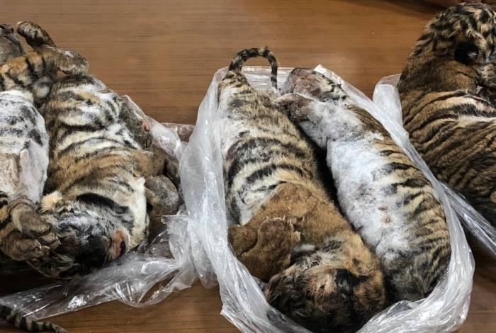 Animais seriam traficados por homem que foi preso