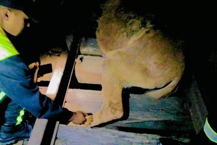 Cavalo ficou com pata presa nos trilhos da SuperVia ao tentar atravessar a via férrea