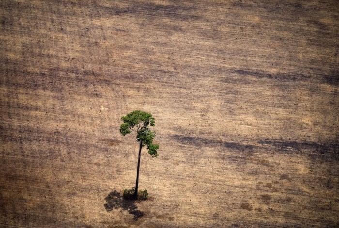Desmatamento na Amazônia cresceu extraordinariamente no governo Bolsonaro