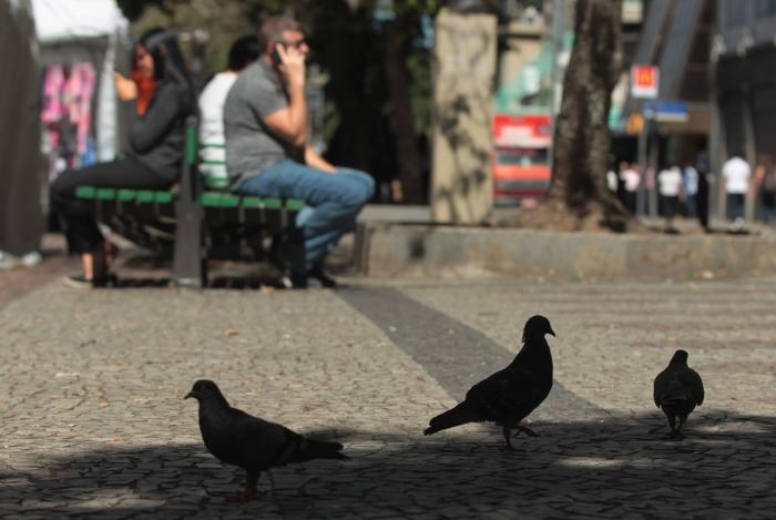 Em praças públicas o contato com pombos é quase inevitável