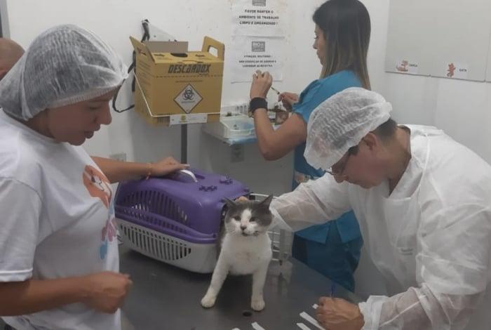 Profissionais atenderam 150 animais neste sábado