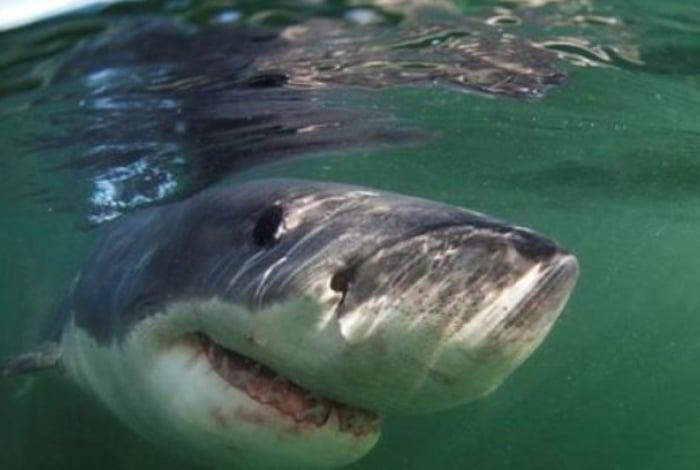 Um tubarão branco de seis metros foi flagrado por uma família durante passeio nos EUA