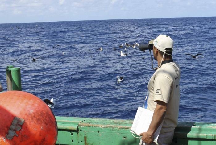 Criado em 1990, o Projeto Albatroz trabalha pela preservação de albatrozes e outras aves brasileiras
