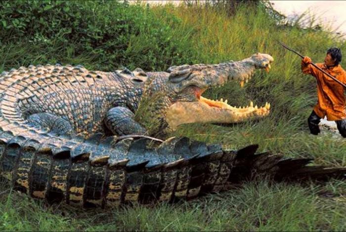 rMenino de 10 anos é devorado por crocodilo