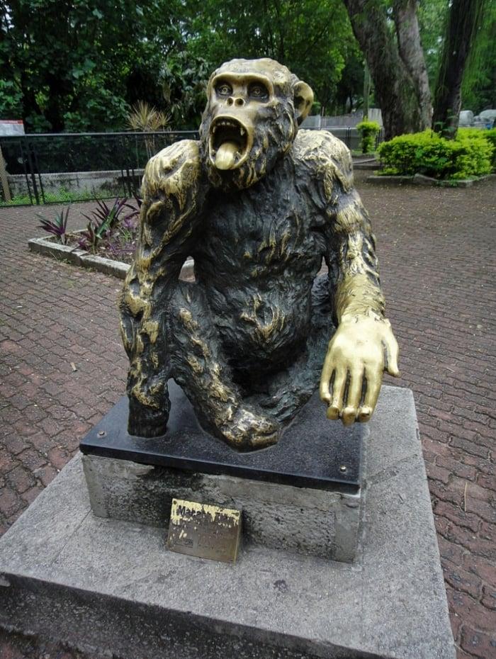 Macaco Tião recebeu 400 mil votos na eleição de 1988