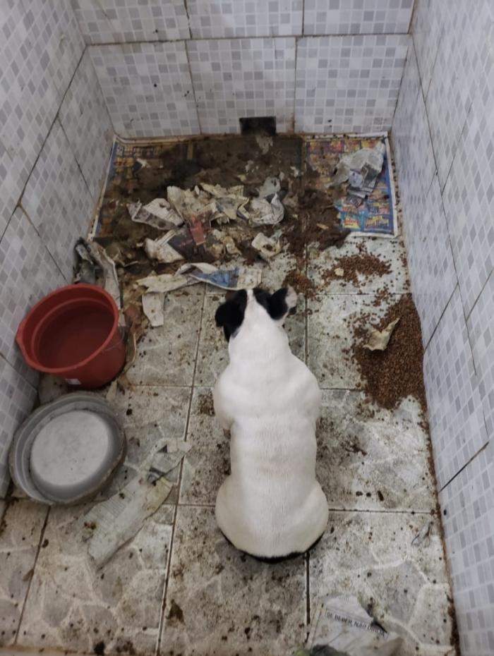 Nos canis, fezes e urina ficam junto à ração