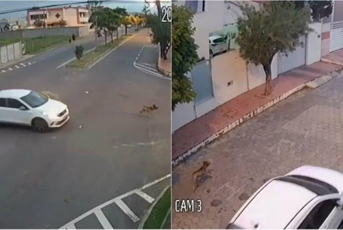 Imagens mostram veículo perseguindo animal