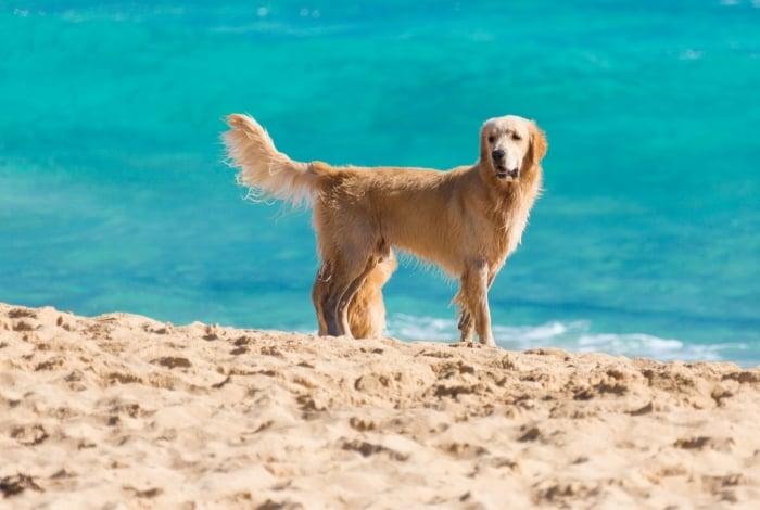 Vereadores do Rio aprovam lei que permite cães nas praias da cidade