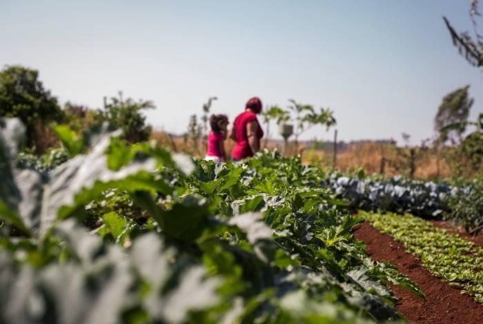 Produtores rurais são beneficiados por decreto durante a pandemia