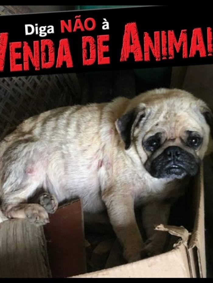 Cão maltratado resgatado de canil ilustra a campanha
