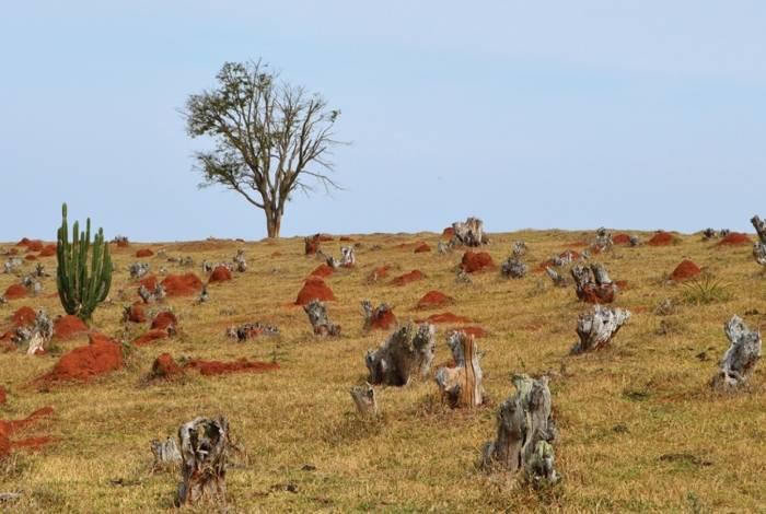Queimadas no Cerrado superam da Amazônia, aponta Inpe