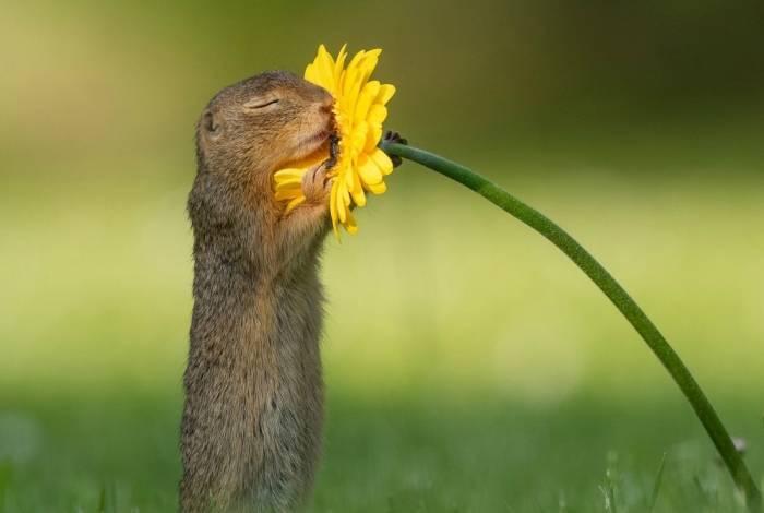 Fotógrafo captura momento em que esquilo cheira uma flor amarela e imagem viraliza