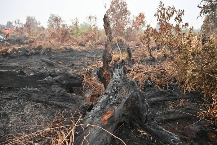 Incêndios na Indonésia alertam para problema do aquecimento global