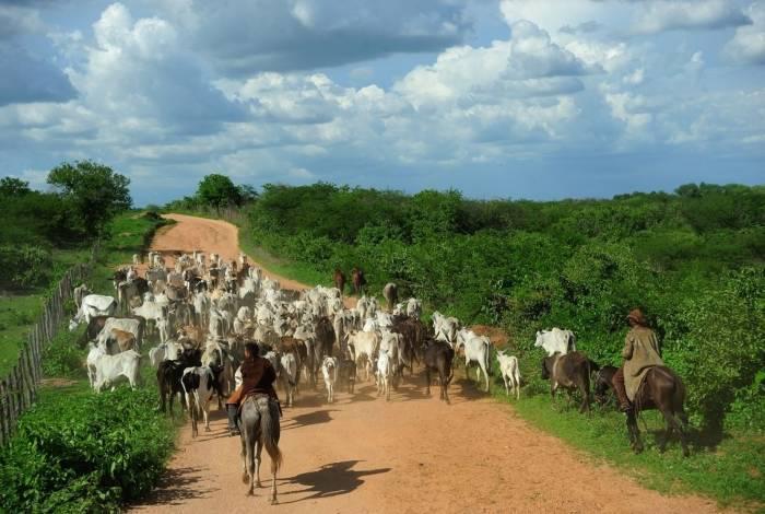 Total de bois, vacas e novilhos abatidos no segundo trimestre deste ano chegou a 8,04 milhões de animais