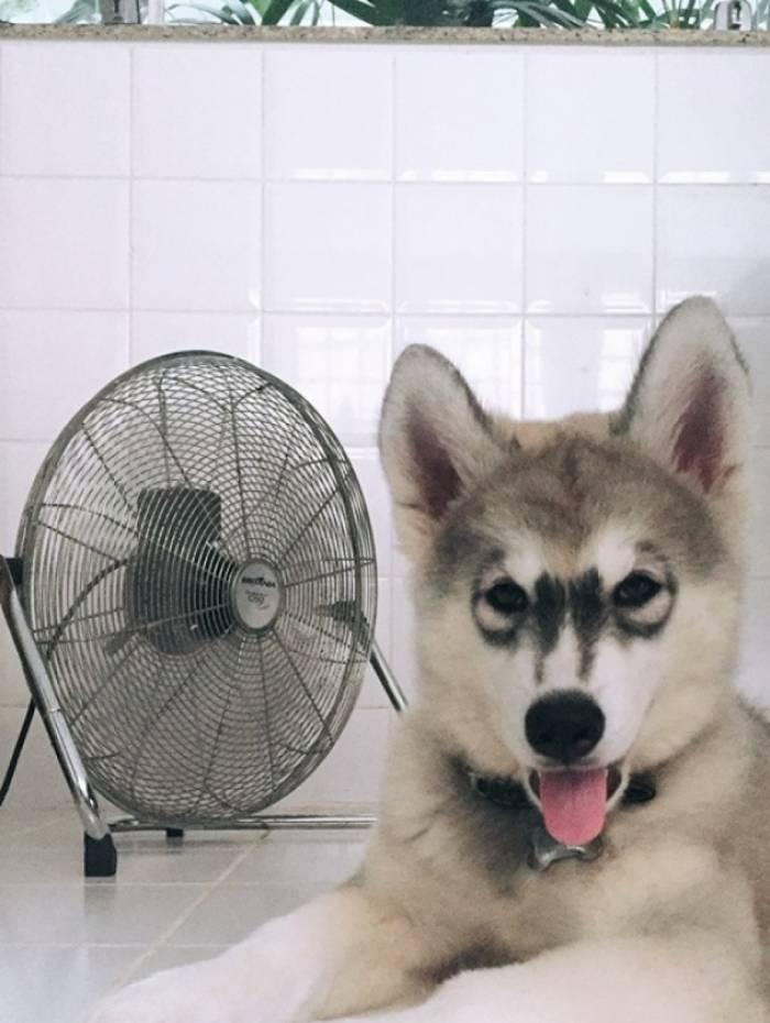 Maya aprendeu a ligar o ventilador para se refrescar