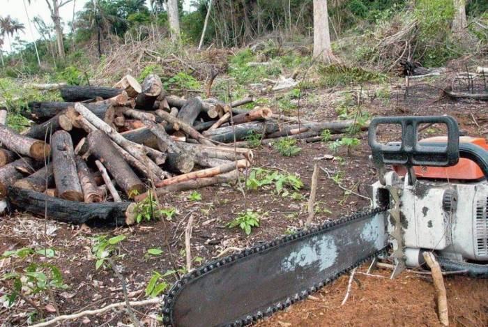 Relatório aponta ligação entre redes criminosas e desmatamento