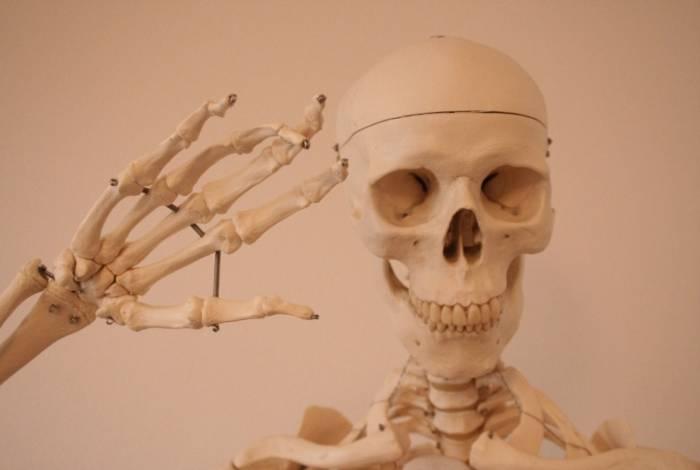Quando o cérebro reconhece a situação arriscada, envia comandos para o esqueleto inundar a corrente sanguínea do hormônio osteocalcina, produzido nos ossos, essencial para a reação de fugir ou lutar