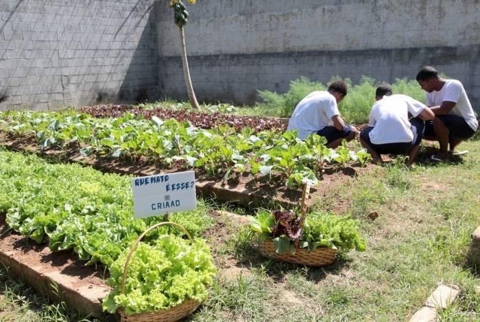 Os jovens assistidos pelo Centro de Recursos Integrados de Atendimento ao Adolescente (CRIADD) de Macaé tiveram melhora geral de comportamento e bem-estar quando passaram a cuidar de uma horta no local