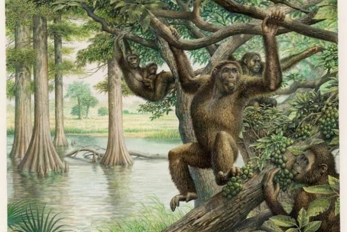 Fóssil em questão é um osso de pélvis da espécie Rudapithecus