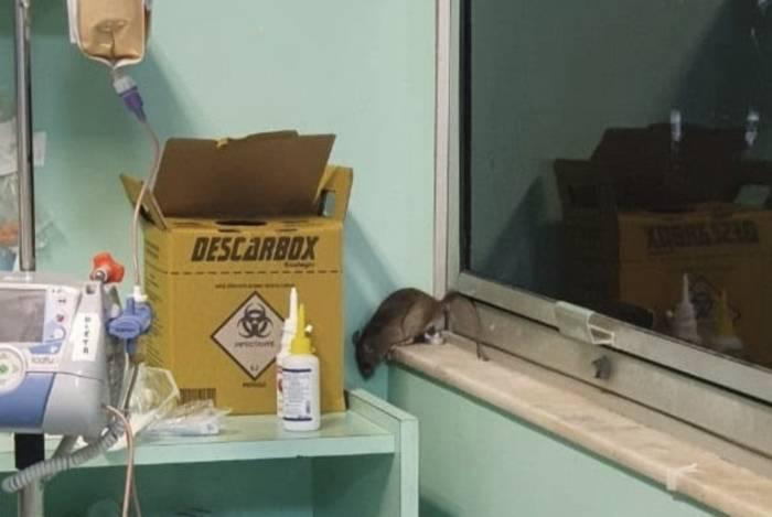 Uma ratazana apareceu no CTI cirúrgico do Hospital Universitário Clementino Fraga Filho, no Fundão