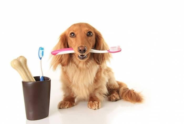 A higiene bucal diária dos pets deve começar a partir dos 6 meses de idade