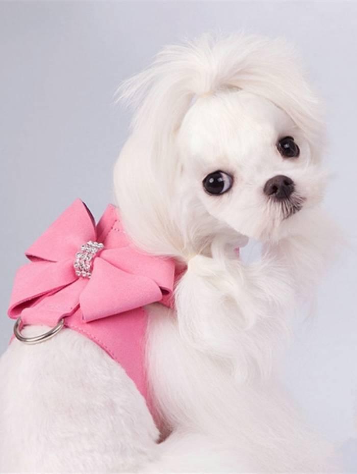 O câncer de mama também é comum em cadelas e gatas