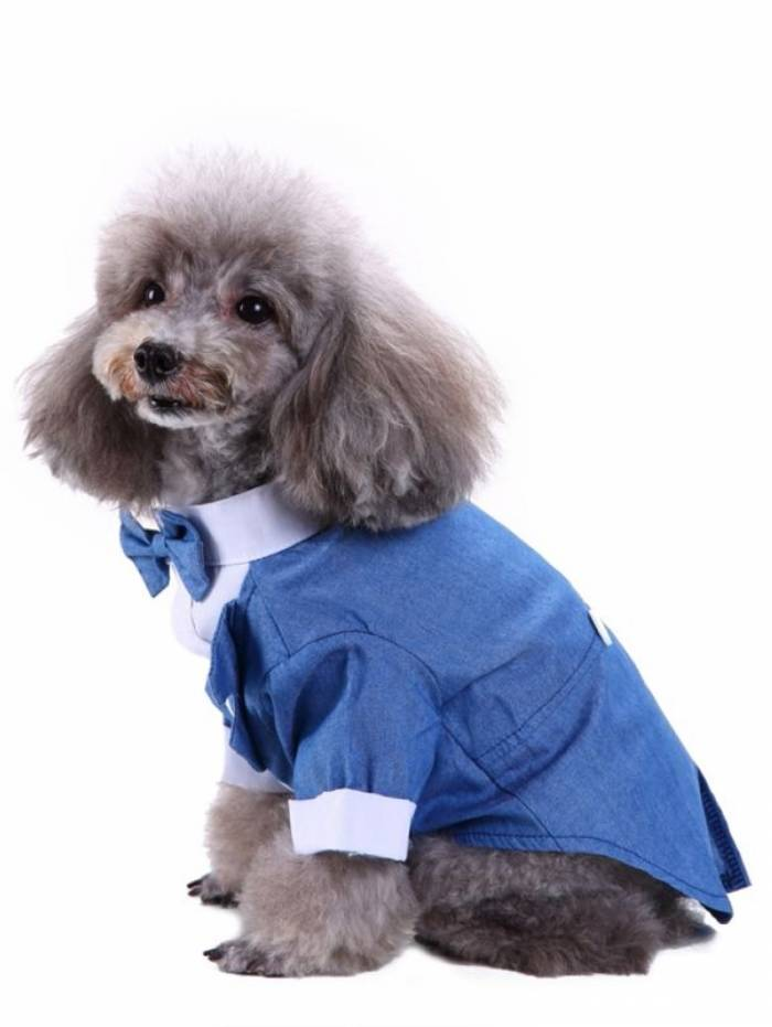 Cães e gatos também podem desenvolver câncer de próstata