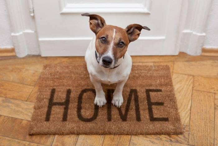 É preciso preparar a casa para dar segurança e conforto ao pet que vai chegar