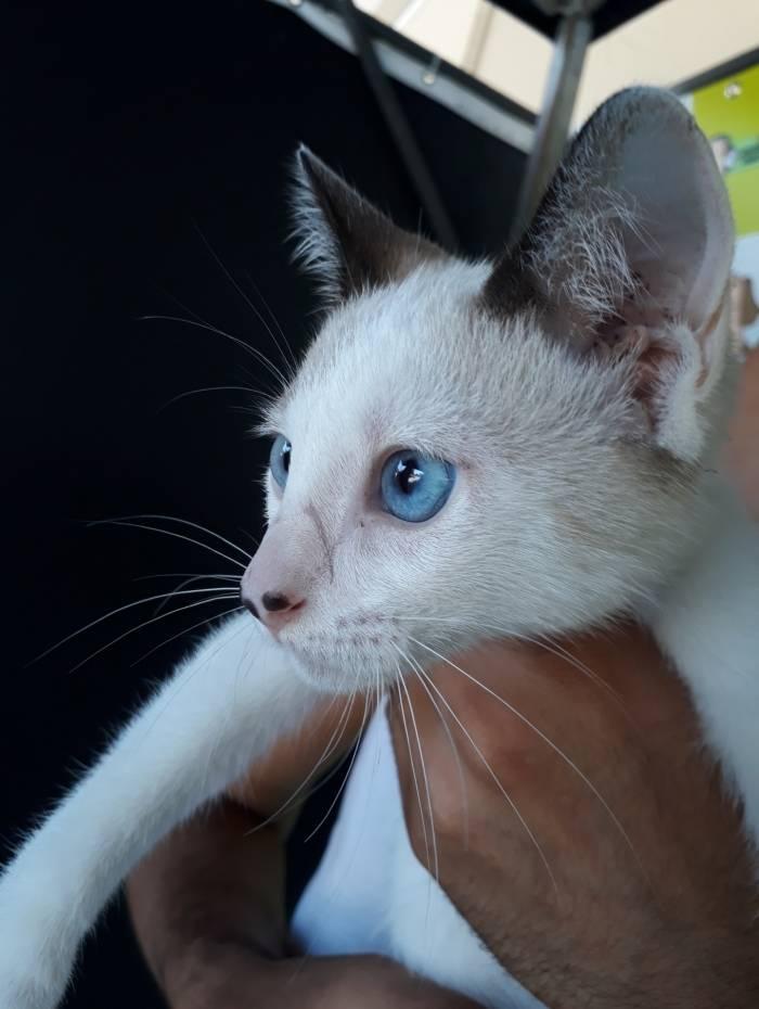 Caxias Shopping promove campanha de adoção de animais - O DIA